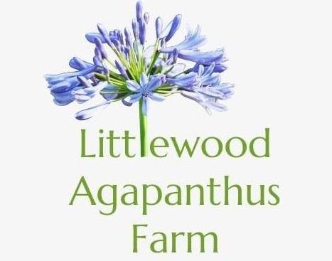 Littlewood Agapanthus Farm